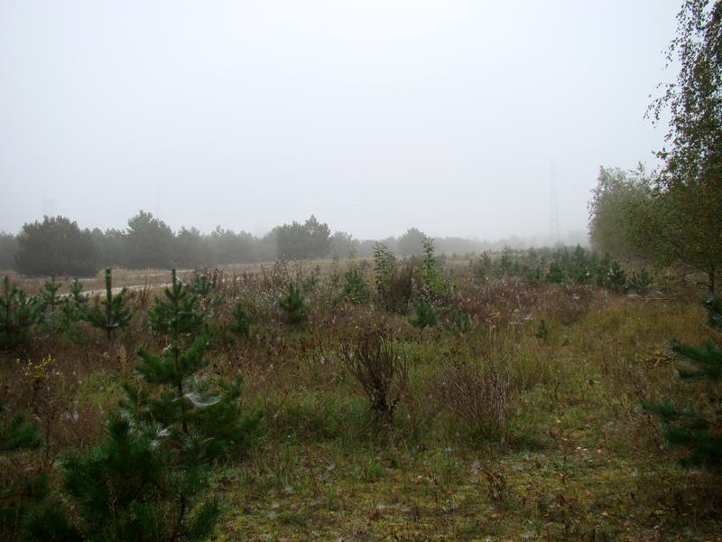 pajęczyny w jesiennym lesie o poranku