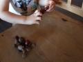 kasztany-2latka-5