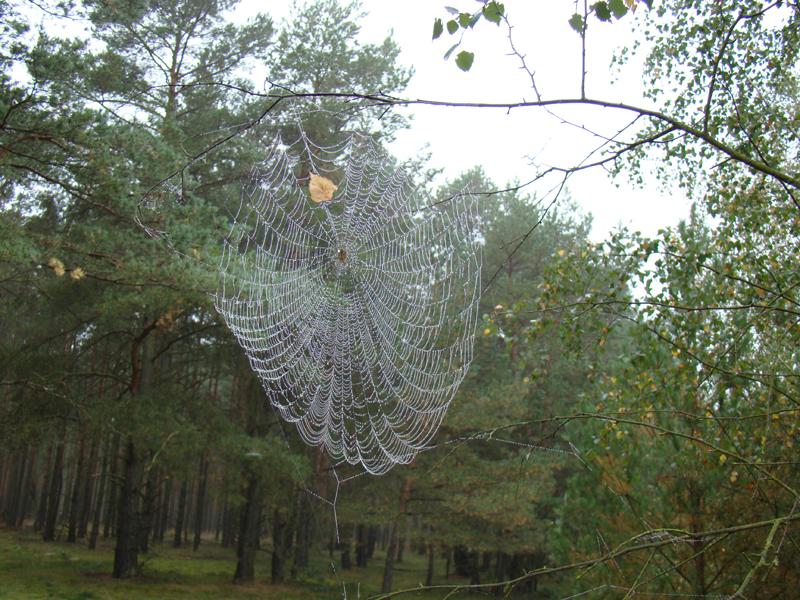 pajeczyna-na-drzewie