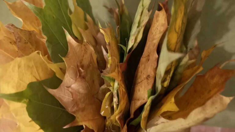 liście klonu, z liści klonu, jak wykorzystać liście, jesienne liście